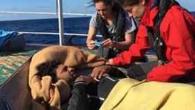 Operarios del Open Armes prestan ayuda a los migrantes rescatados.
