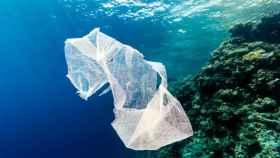 Una bolsa de plástico flota junto a un arrecife de coral