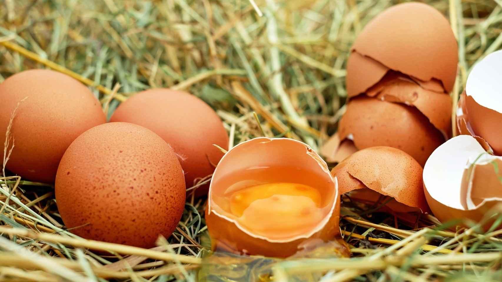 Cómo Saber Si Un Huevo Está Malo O Bueno