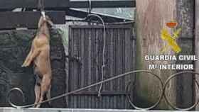 Un perro, ahorcado en el patio de una vecina de La Coruña.