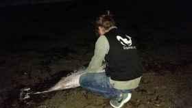 Un miembro de Equinac junto al delfín
