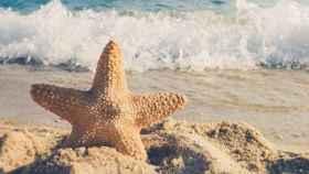 estrella_mar_playa