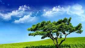 camposverdes