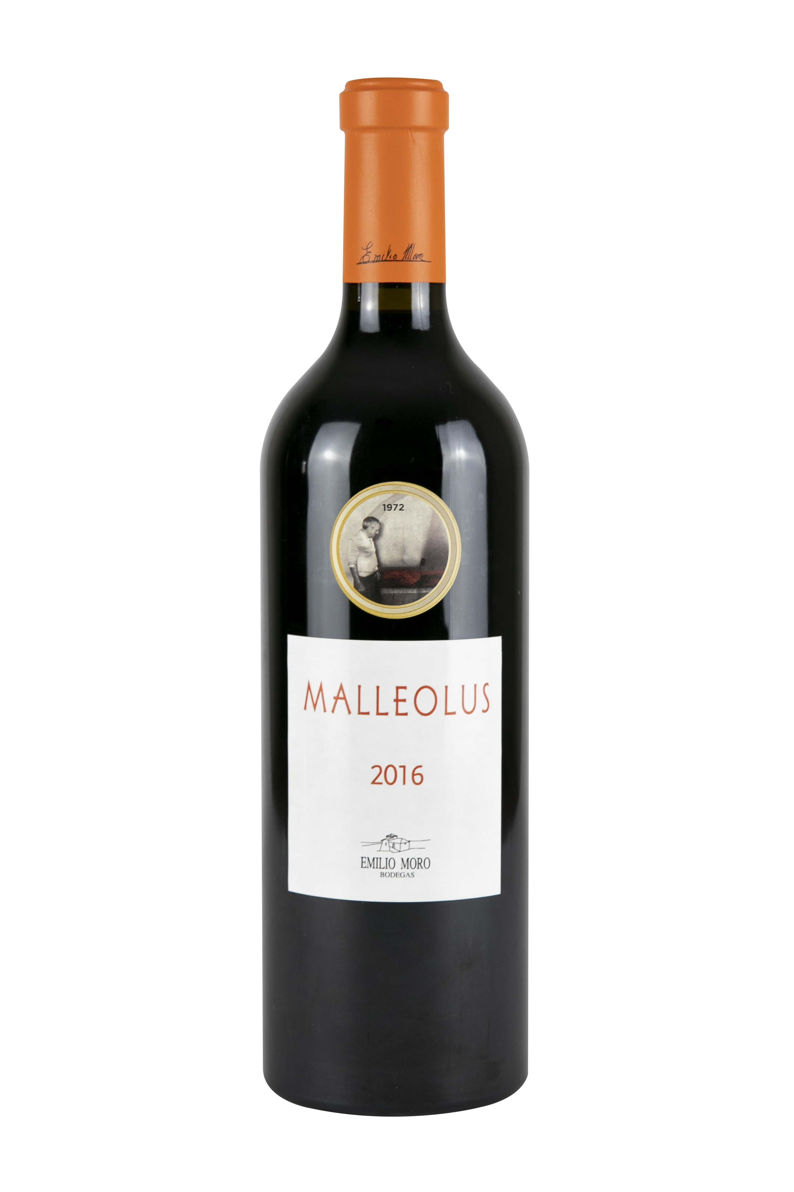 Malleolus16