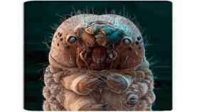 El ácaro Demodex vive en tu cara y devora tu piel muerta.