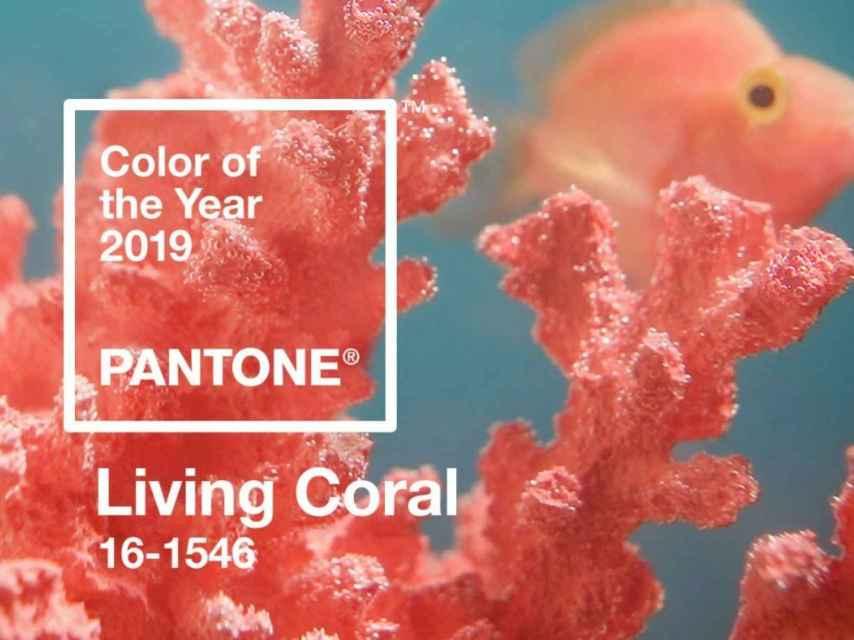 Color of the Year 2019, según Pantone.