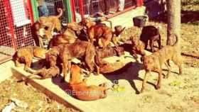 Imagen de los canes abandonados en el parque andaluz.