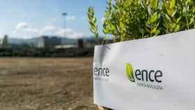 Unas tareas de reforestación de Ence.