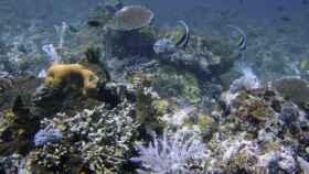Arrecife de coral cerca de las islas Komodo, Indonesia. AP/Gtres.