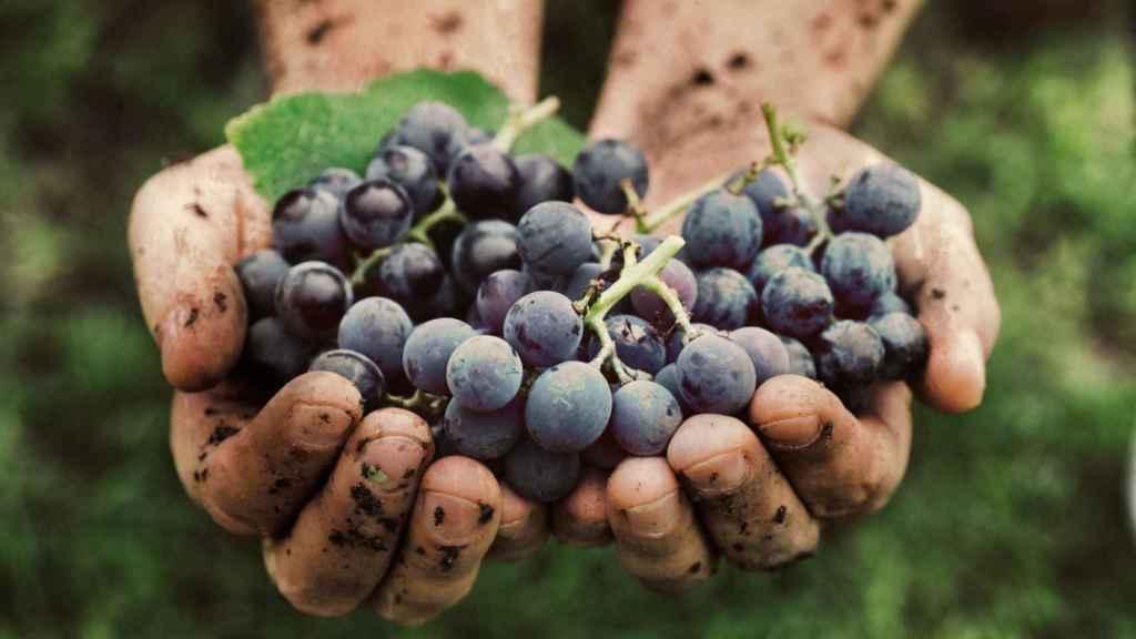 Resultado de imagen de vino biodinamico