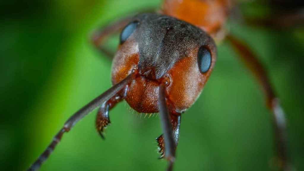 No dejes que sigan invadiendo tu espacio las hormigas