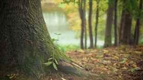 Un árbol es un ser viviente que hay que cuidar