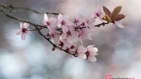 Valladolid-Primavera-Flores-Color-Reportaje-26
