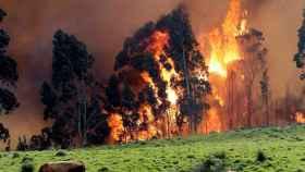 Incendio en las proximidades de Naves (Llanes).