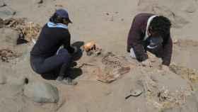Excavación en Huanchaco, Perú.