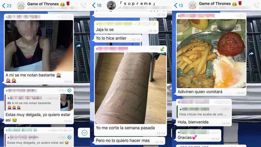 En la imagen, varias capturas de los grupos de WhatsApp de anoréxicas y bulímicas donde me infiltré durante una semana.