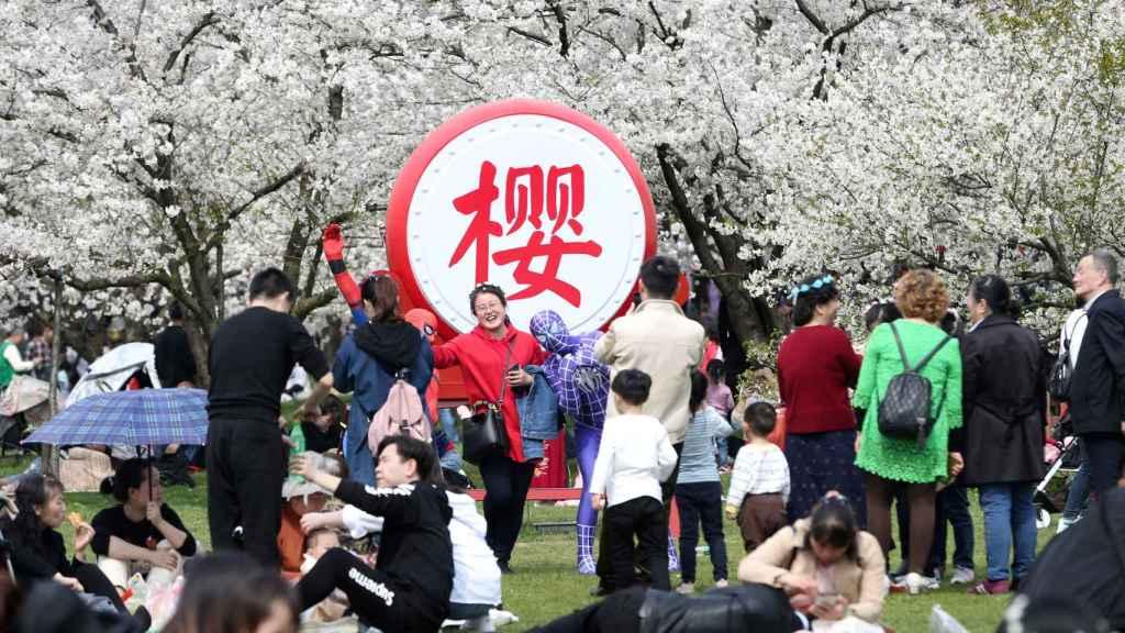 Japoneses dan la bienvenida a la primavera con los cerezos en flor.