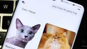 Google Assistant mejora sus respuestas haciéndolas más visuales