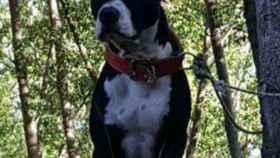 Tyson, el perro que murió al caer desde una tercera planta