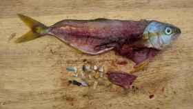 Pescado y plásticos de su estómago. Foto: Greenpeace