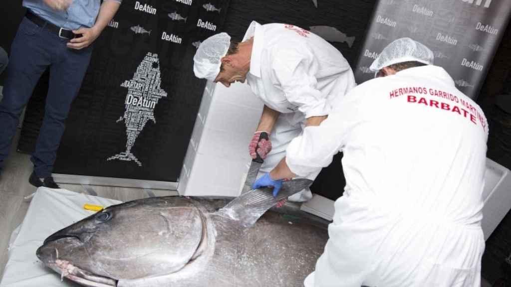 Ronqueo del atún rojo. Foto: DeAtún