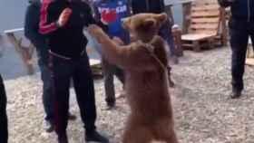 Khabib, campeón de la UFC, encadena a un oso cachorro para torturarlo y maltratarlo con amigos