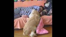 perra cachorro viral twitter