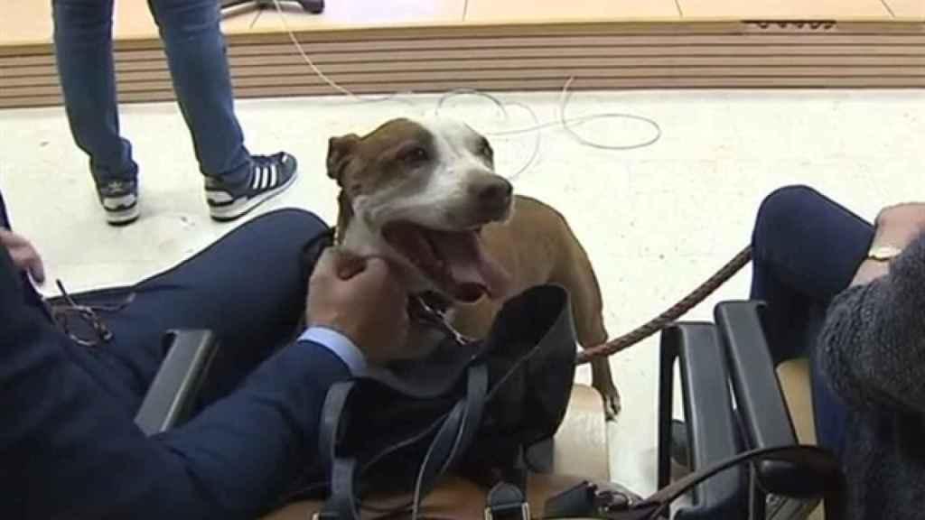 Milagros, la perra maltratada. Foto: RTVC