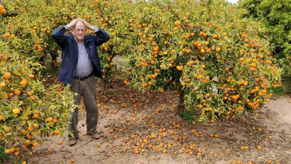 En la imagen, Paco Sorolla, un agricultor de Castellón afectado por la crisis de las naranjas