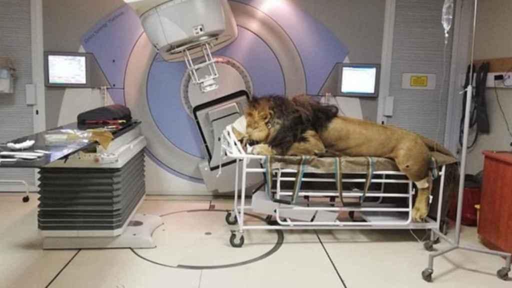 Caos preparado para la radioterapia.
