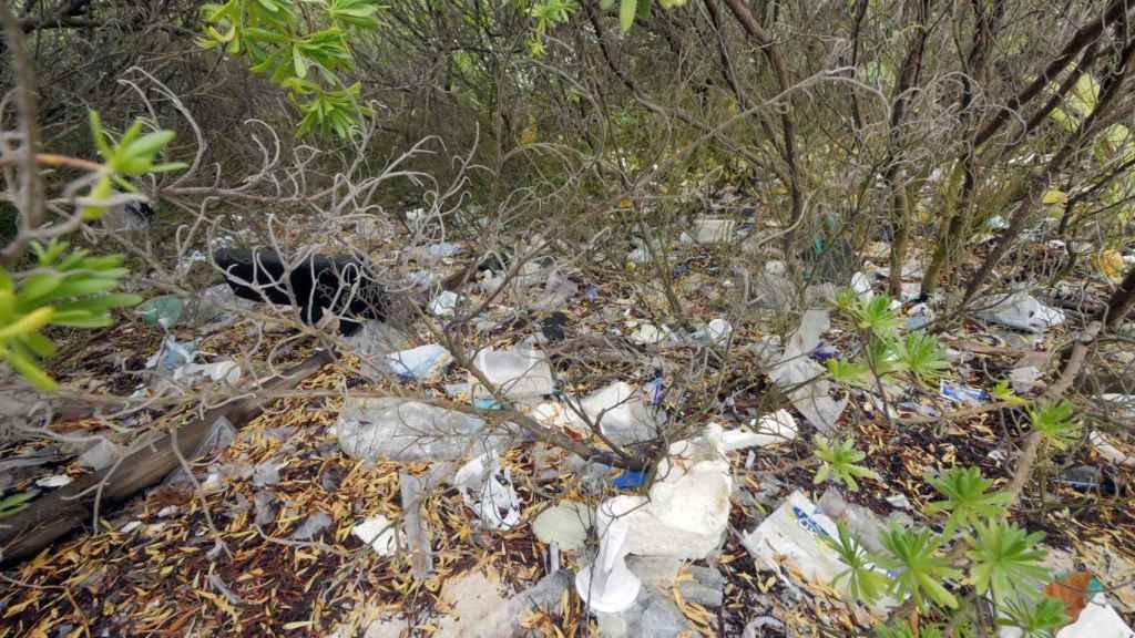 Vegetación con plásticos en una de las islas.