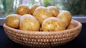 Una cesta de patatas recién recolectadas