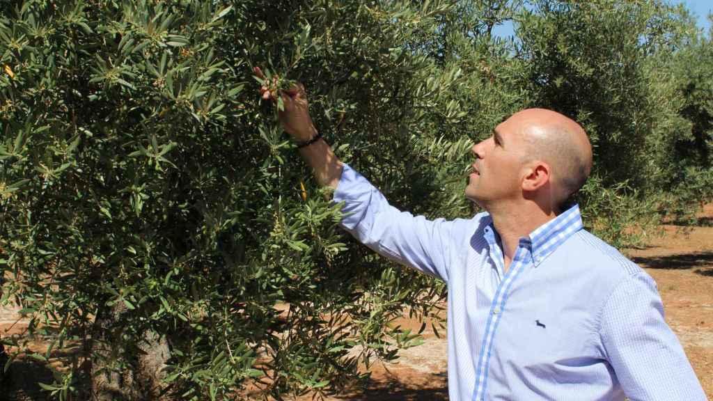 José Gálvez González en uno de sus campos de olivo.