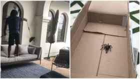 Lucha casera entre Jamaal Charles y una araña. Foto: Instagram (@djcharles25)
