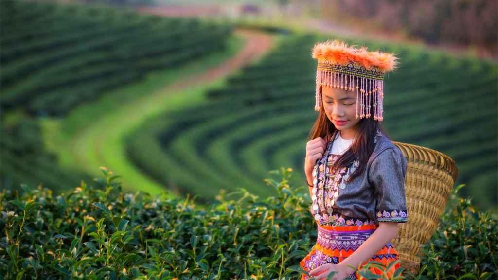 Chiang Rai.