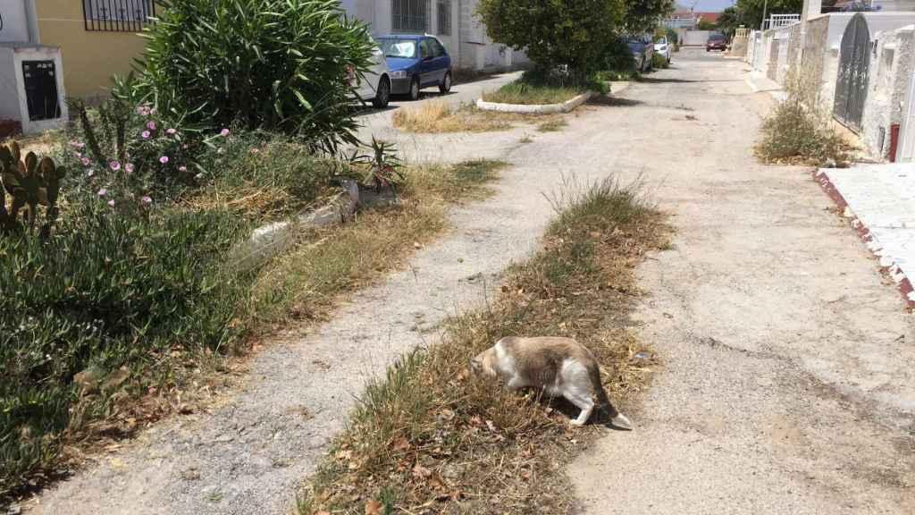 2019, los gatos se han hecho fuertes en las calles sin asfaltar