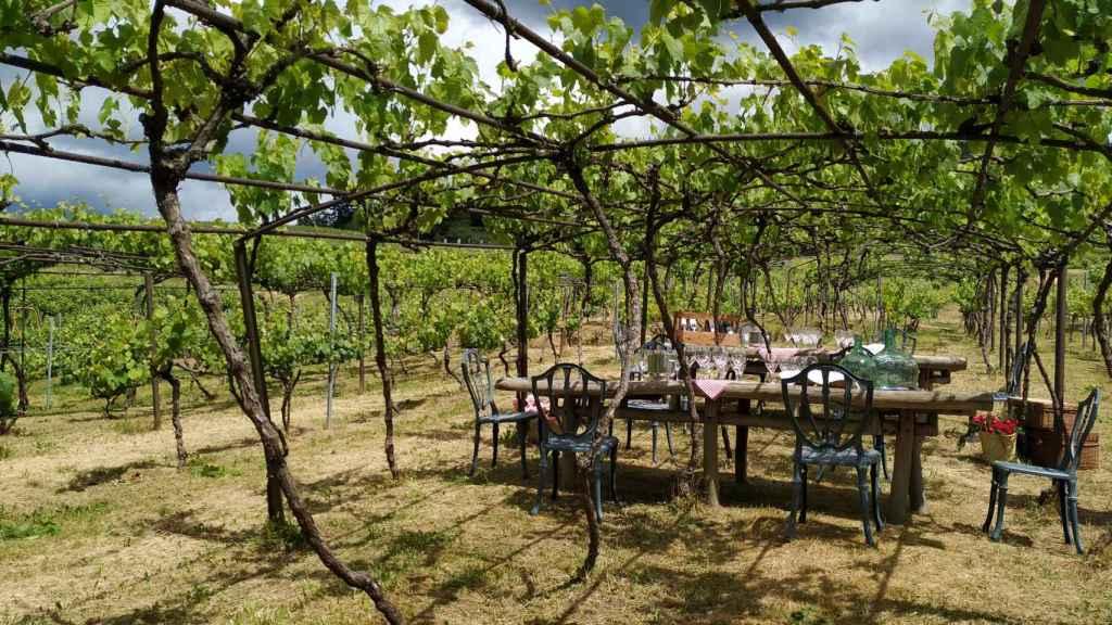 'Hamaiketako' entre viñas.