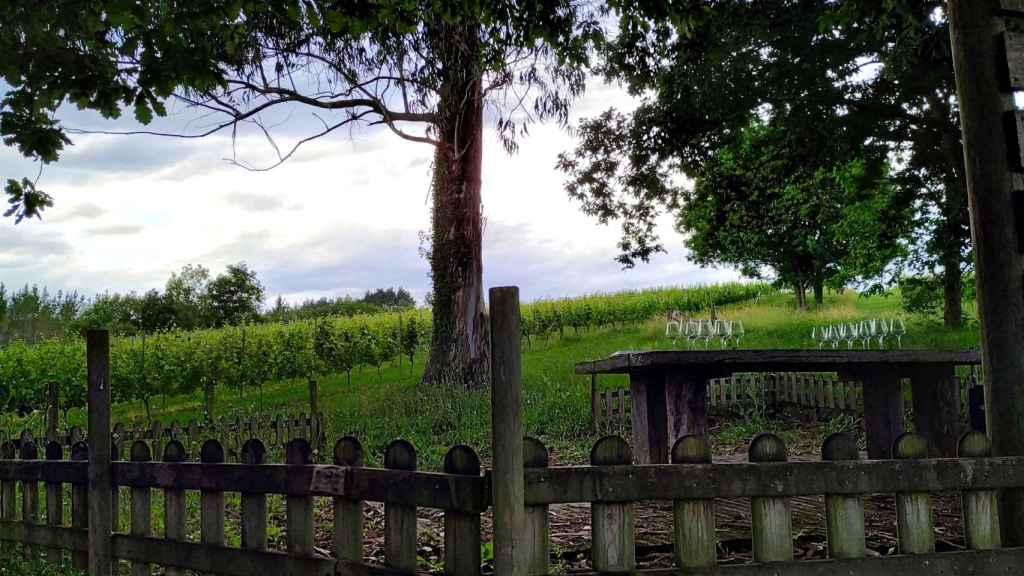 Cata de txacoli en el viñedo de Itsasmendi.