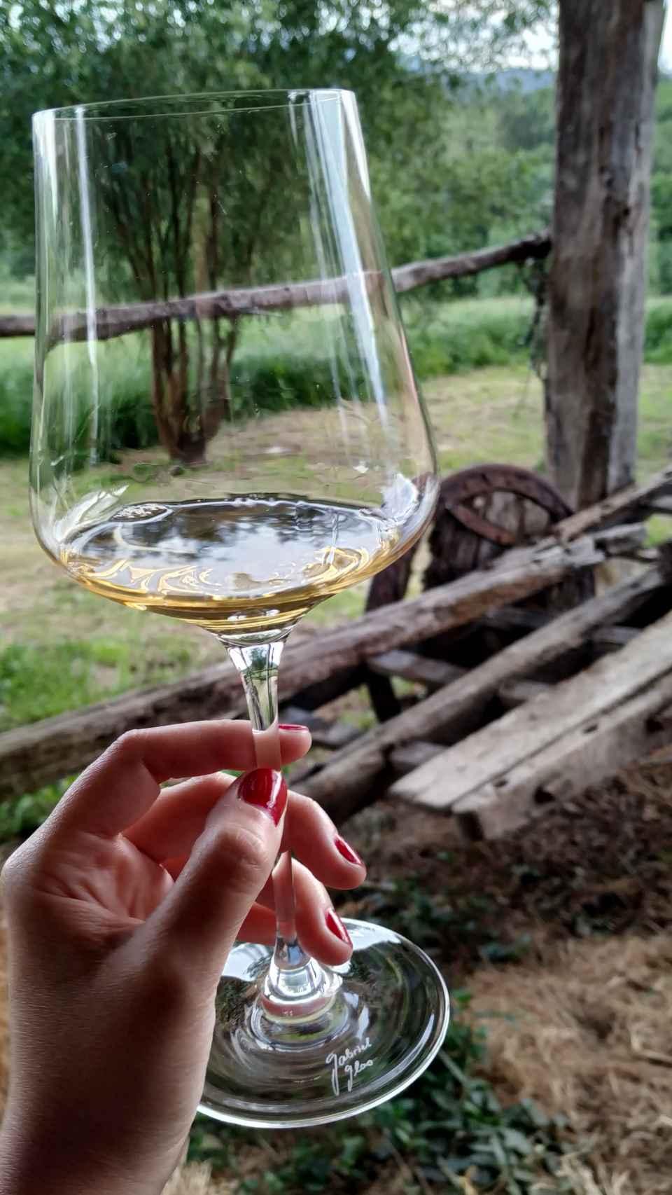 Un txacoli en el viñedo.