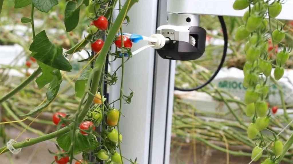 Soluciones para llevar la agricultura a la ciudad