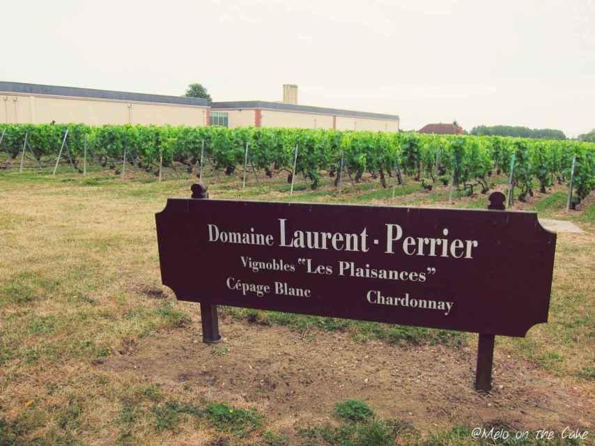 Uno de los viñedos de Laurent-Perrier.