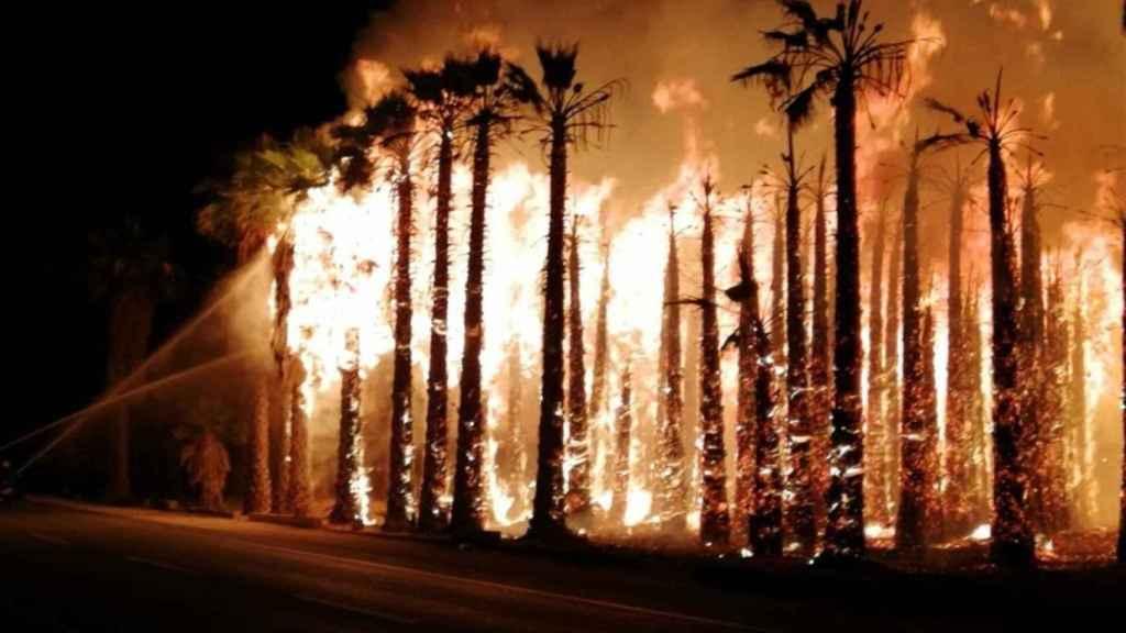Los huertos de palmeras de Elche, ardiendo de madrugada.