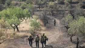 Municipios afectados por el fuego pedirán la declaración de zona catastrófica.