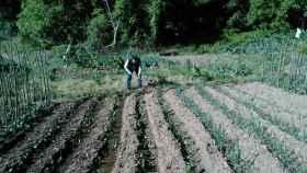 curso cultivo pimiento asado