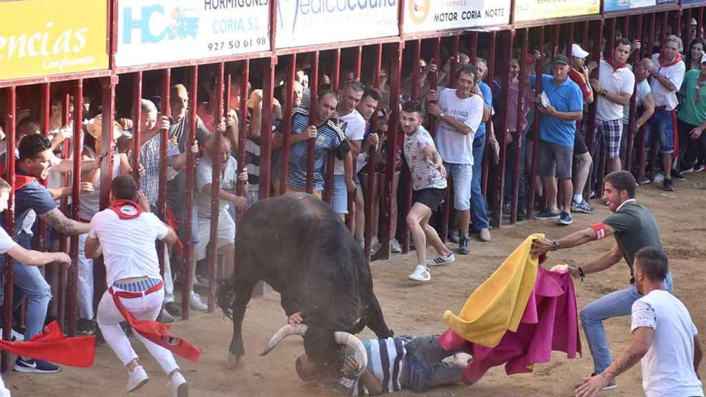El toro Judío corneó a un hombre en la plaza