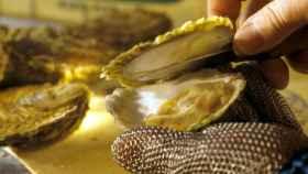Ostras, un alimento que en mal estado puede causar intoxicaciones alimentarias.