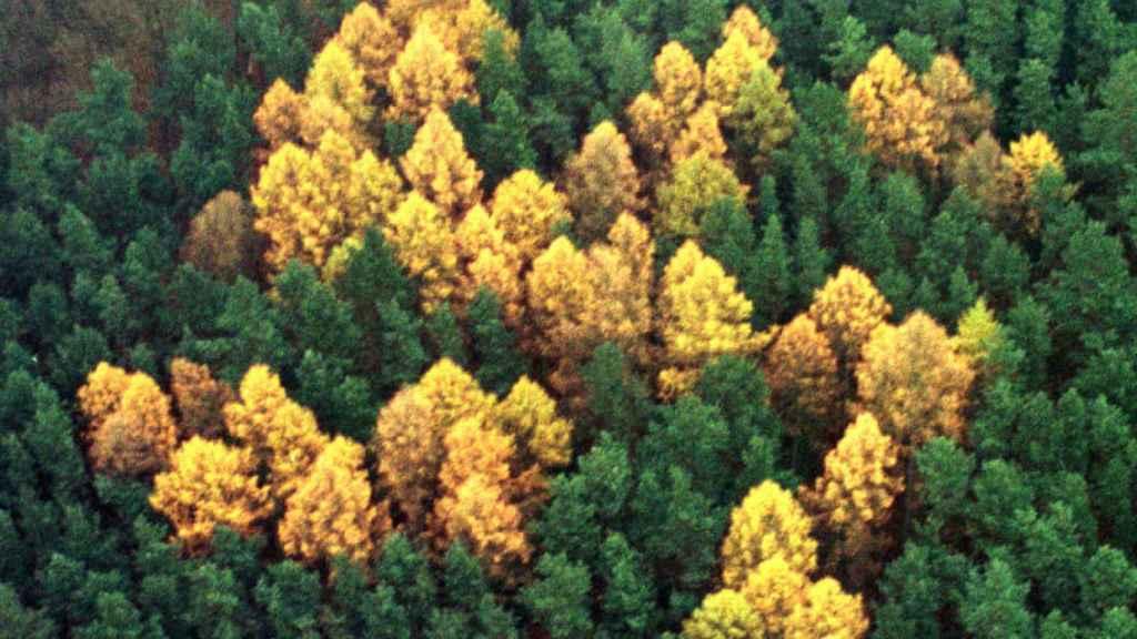 Fotografía aérea del 'Bosque Esvástica', donde se observan árboles plantados en forma del símbolo nazi en honor a Adolf Hitler en la década de los treinta.