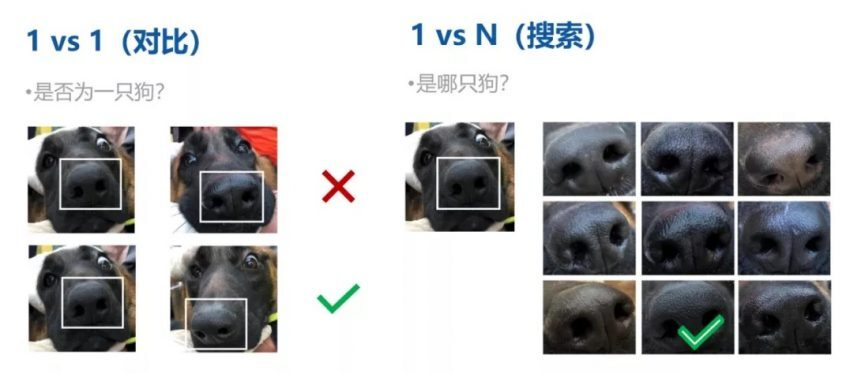 reconocimiento perros 2