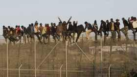 Inmigrantes encaramados a la valla fronteriza de Melilla.