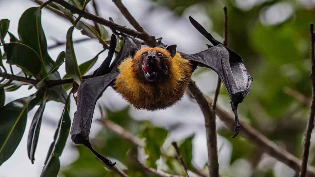 Murciélago en ramas.